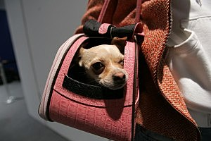 Pocket Puppy in it's own private mobile home