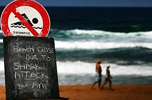 Shark Attack/Getty Images