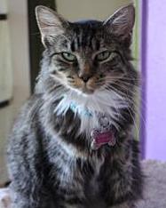 Scarlet Kitten