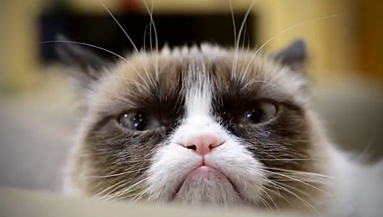 Grumpy Cat Music Video