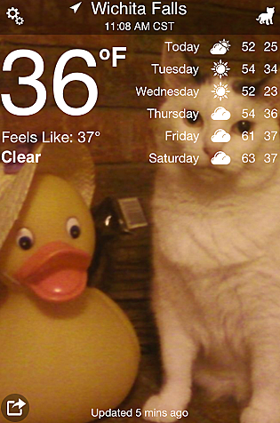 My cat on the Weather Kitty app