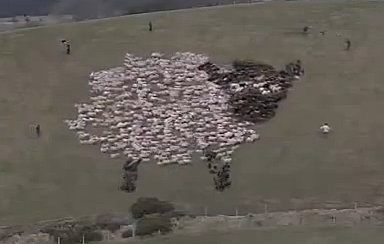 Extreme Shepherding