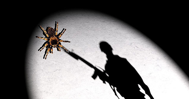 spider-shoot-637x333